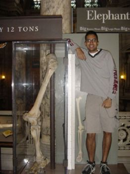 Бедренная кость гиганта, обнаруженная в 1950 г. во время строительства шоссе на юго-востоке Турции.
