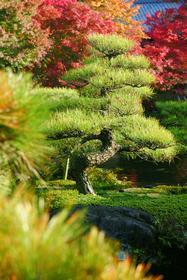 Сады Коко-эн так же совершенны и удивительно красивы, как и Замок белой цапли